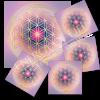 Untersetzer Blume des Lebens - Motiv 13 / Set